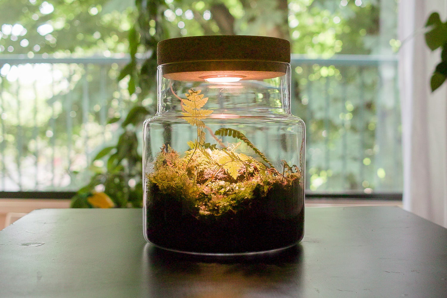 Closed Terrarium From Ikea Sinnerlig And Ledberg Jeremyhall Com Au